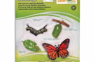 ciclo-de-vida-mariposa-monarca