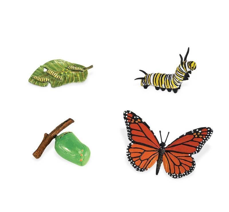 ciclo-de-vida-mariposa-monarca 2